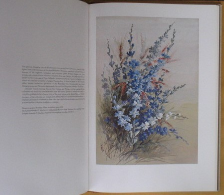 Image for Flower Paintings of Ellis Rowan: From the collection of the National Library of Australia