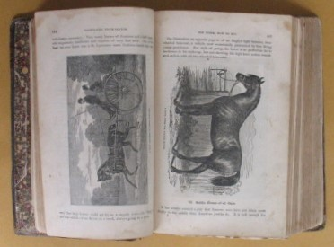 Image for ILLUSTRATED STOCK DOCTOR AND LIVE-STOCK ENCYCLOPAEDIA, INCLUDING HORSES, CATTLE, SHEEP, SWINE AND POULTRY . To Which Has Been Added  A Complete History of Bees